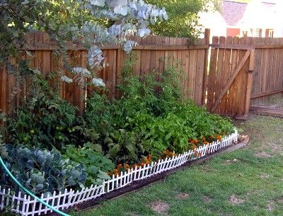 How to Create a No Dig Garden in 12 Steps