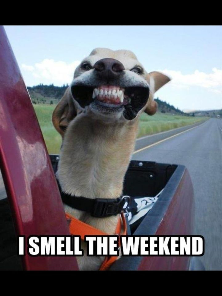 Funny Friday Quotes With Pictures Of Dogs. QuotesGram Cute Happy Friday Pictures