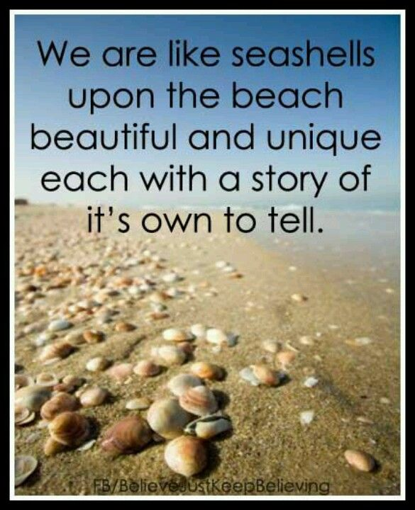 Seashell Quotes And Sayings Quotesgram