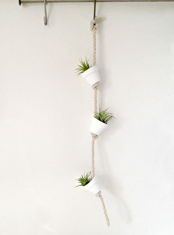 Hanging Plant Wall Decor : Pure white clay pot with air plants hanging from hemp rope