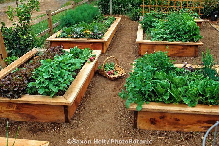 Raised bed vegetable garden gardening ideas pinterest for Raised vegetable bed ideas