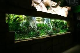 Oliver Knott - Google Search aquariums Pinterest