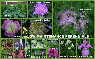 Low maintenance perennial plants yardage pinterest for Low maintenance perennial bushes