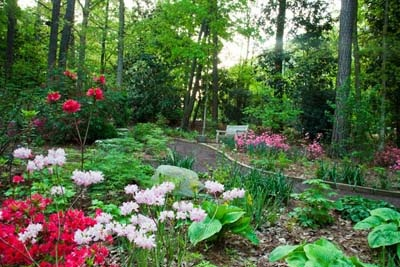 Lilac and pink blooming flowers with green plants in a garden along a pathway