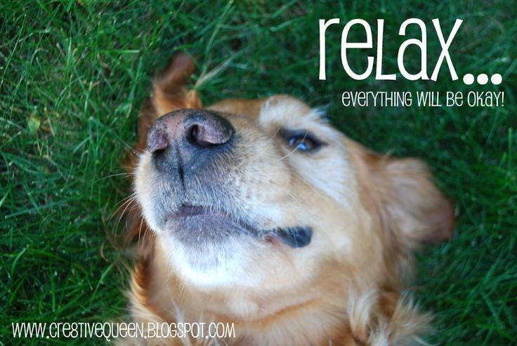 relax! | Dog Love | Pinterest