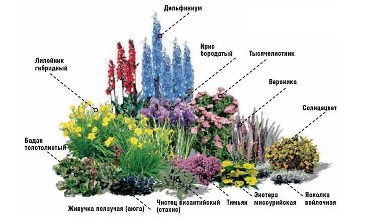 Схема высадки цветов в цветники