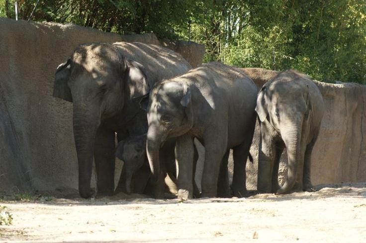 elephants and marshmallows essay