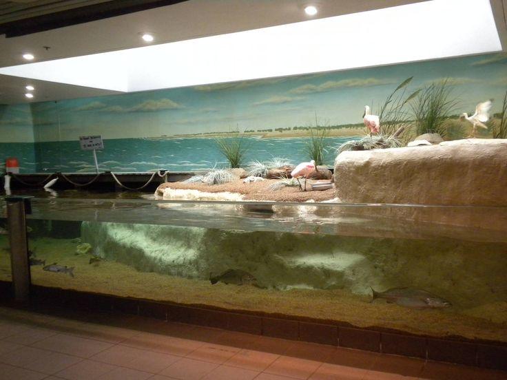 Texas State Aquarium Salt Marsh Vivarium Aquarium