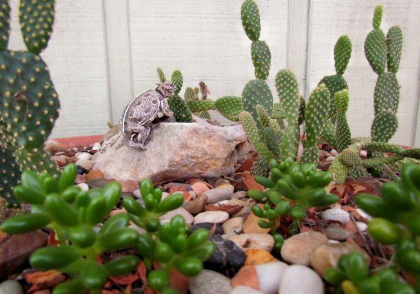 Pin by Karen Noltee on Fairy Gardens Pinterest