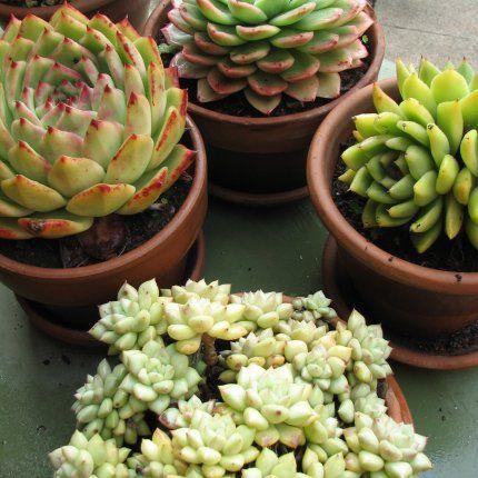 Fausses plantes, Plante artificielle pour intrieur et exterieur pas
