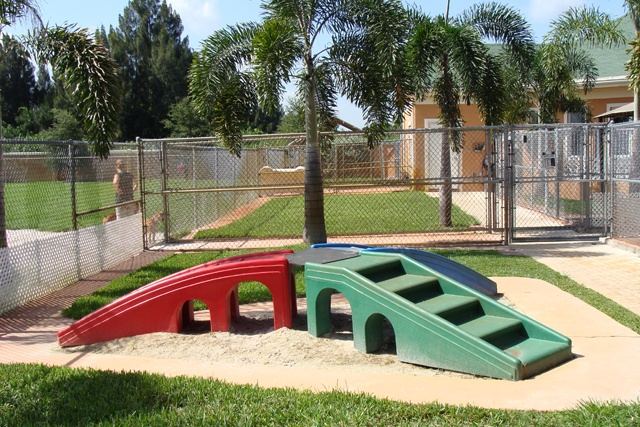 Dog Backyard Playground Ideas : dog playground ideas  Dogs  Pinterest