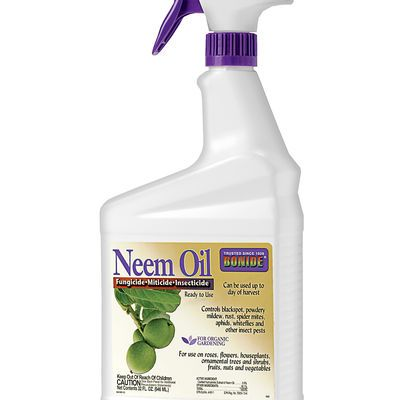 Neem spray
