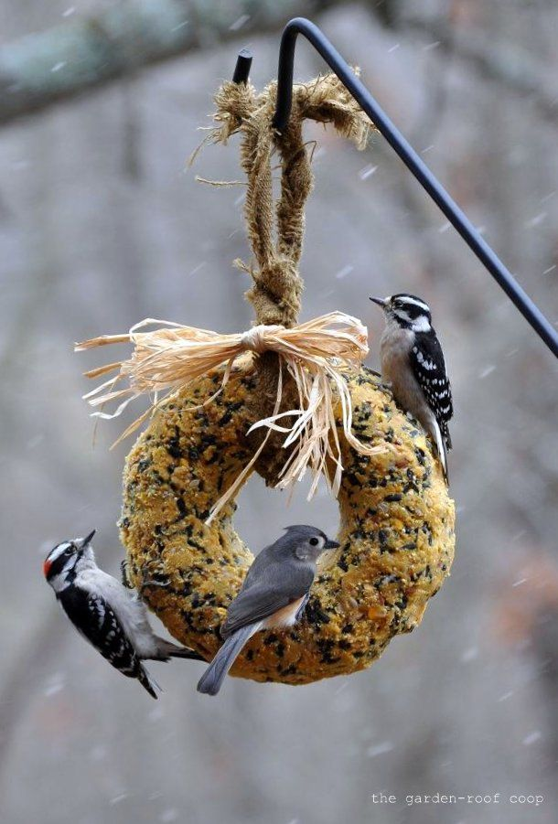 the garden-roof coop: DIY Suet Wreath