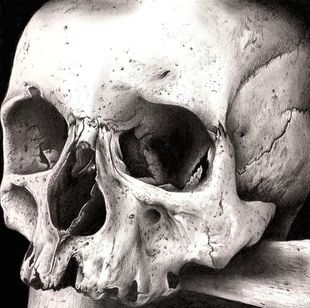 1000 Images About Skull On Pinterest Human