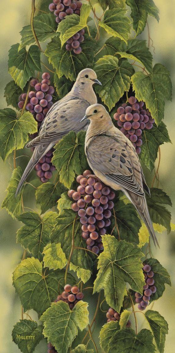""""""" Vineyard-Mourning Doves"""" - Rosemary Millette"""