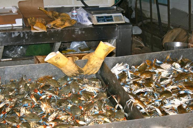 Fish market washington dc dc pinterest for Washington fish market