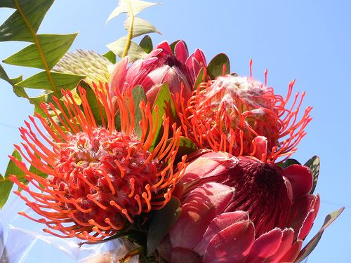 Exotic Bouquet (Flowers of South Africa)