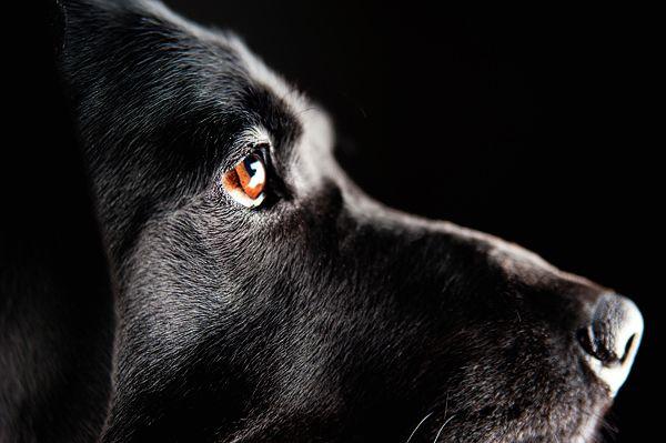 Emilee Fuss Photography   dog photography   Pinterest: pinterest.com/pin/162692605261288684