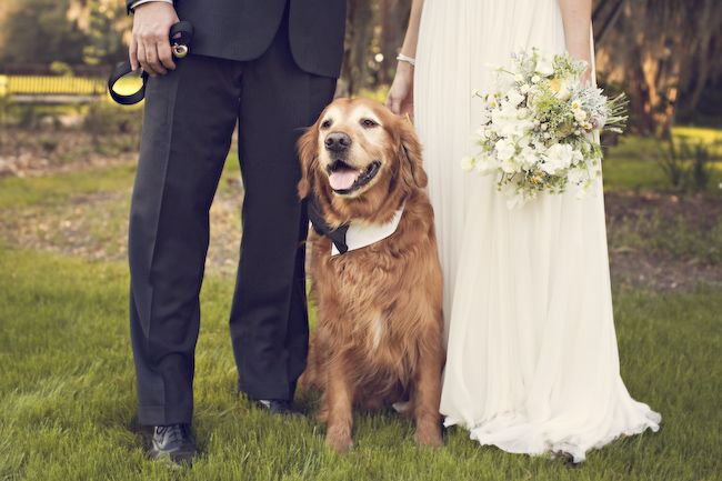Yeah, we love our dog so much she'll be at our wedding :)