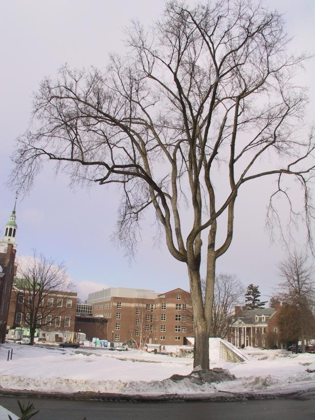 Elm Tree in Winter | Trees | Pinterest Pictures Trees In Winter Pinterest