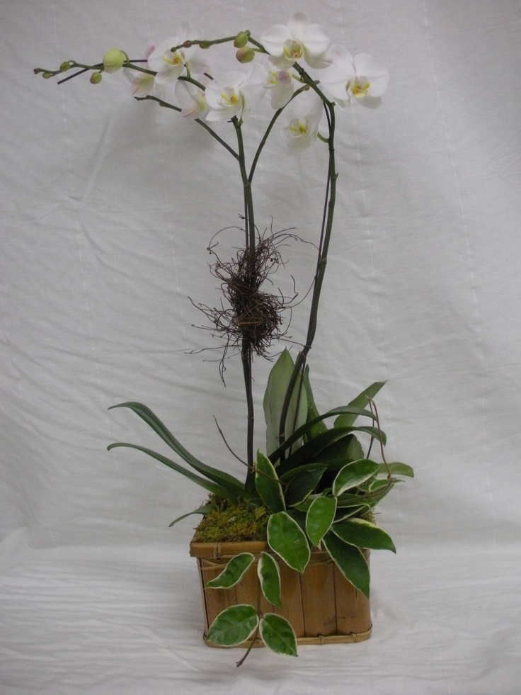 White Orchid Flower Arrangements White Orchid Flower