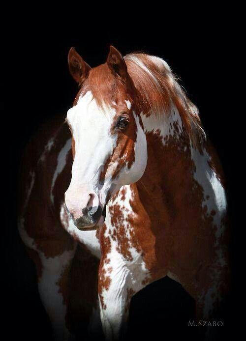 Beautiful paint horse   Horses, my spirit animal.   Pinterest
