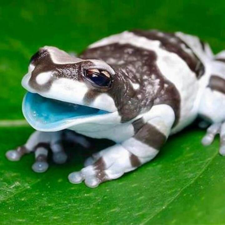 Amazing Frog: Amazing Baby Amazon Milk Frog