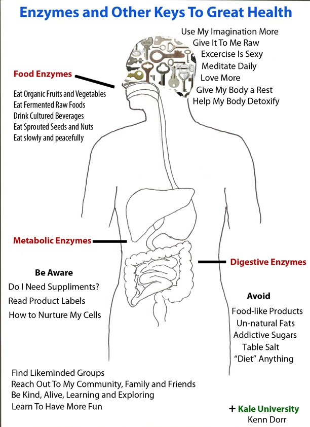 importance and benefits of enzymes in the human body If your body is lacking vital digestive enzymes the importance of enzymes in your gut survival of human pancreatic enzymes during small bowel transit: effect of nutrients, bile acids, and enzymes am j physiol 1997273.