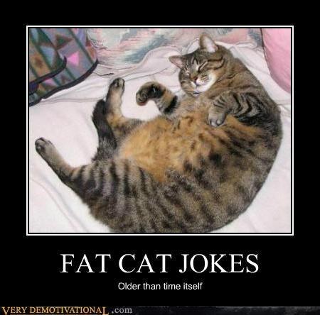 cat jokes | FAT CAT JOKES - Cheezburger | Happy girls are ...