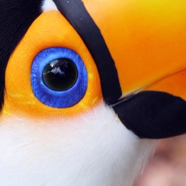 pin the blue eye - photo #22