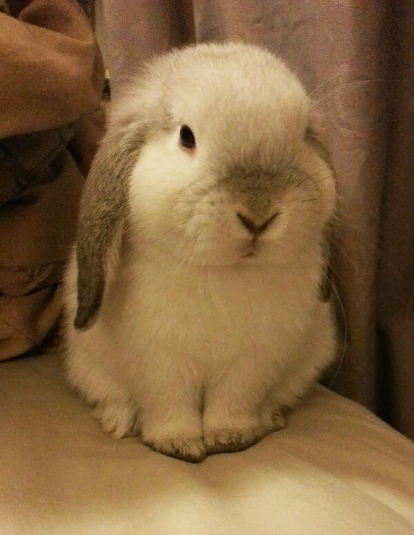 The chubby bunny