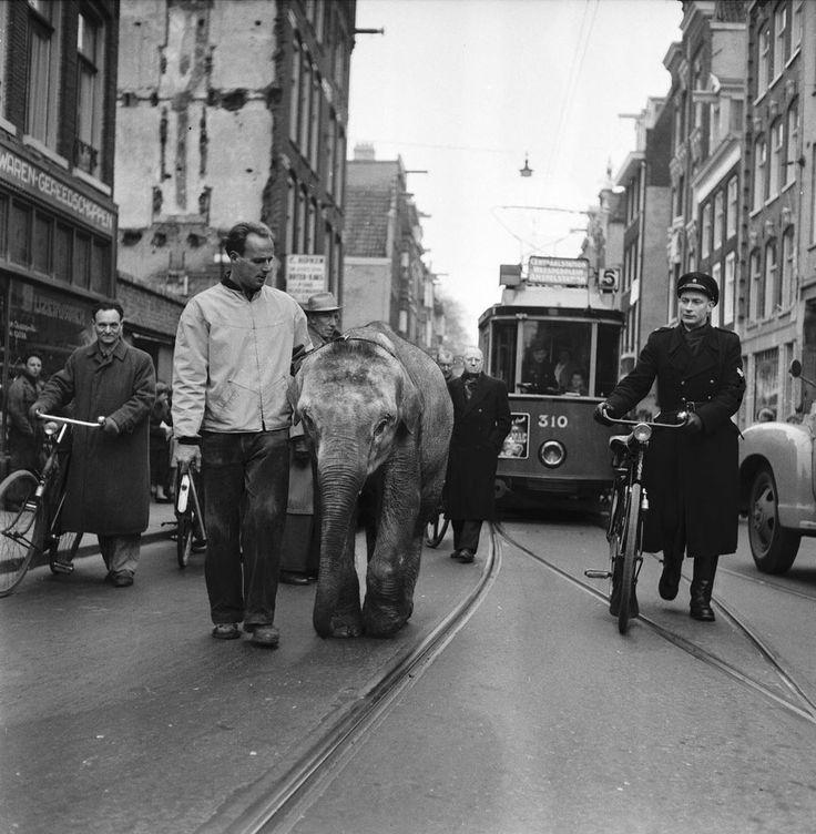 Ben Meerendonk  The elephant Murugan, Weesperstraat, 1955  Thanks tofirsttimeuser