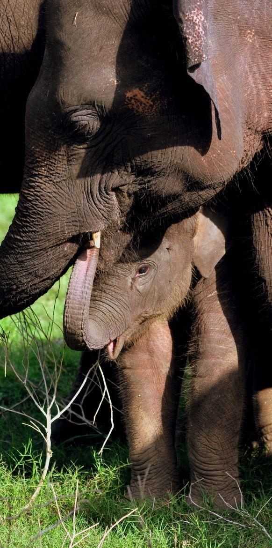 Dunkel. Aber Asian baby elephant