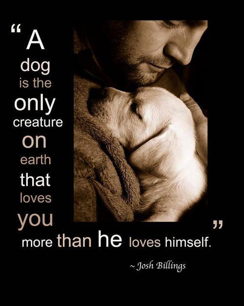 unconditional love get some today i am so a dog