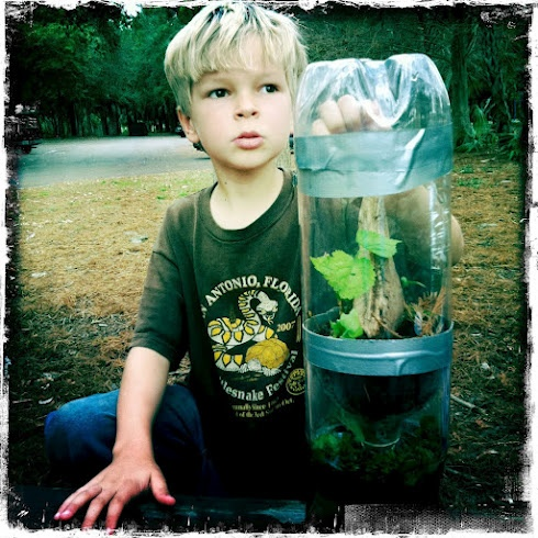 make a world in a pop bottle - ecosystems