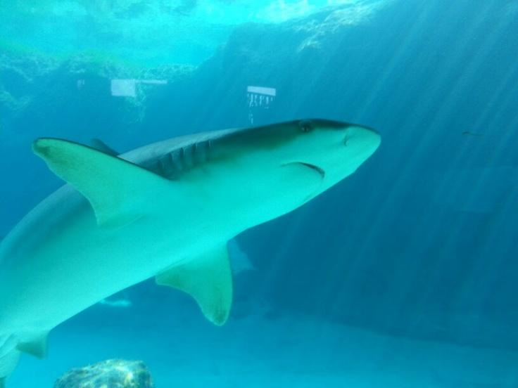 Atlantis Aquarium In The Bahamas