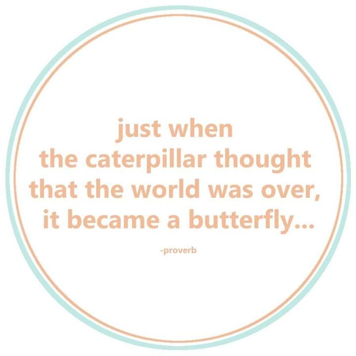 Caterpillar becomes a butterfly | Positive quotes | Pinterest Positive Quotes About Work