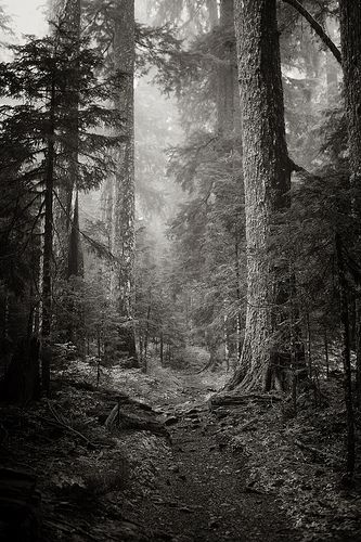 fiebre:    Larch Mountain Trail by Scott Withers Photography