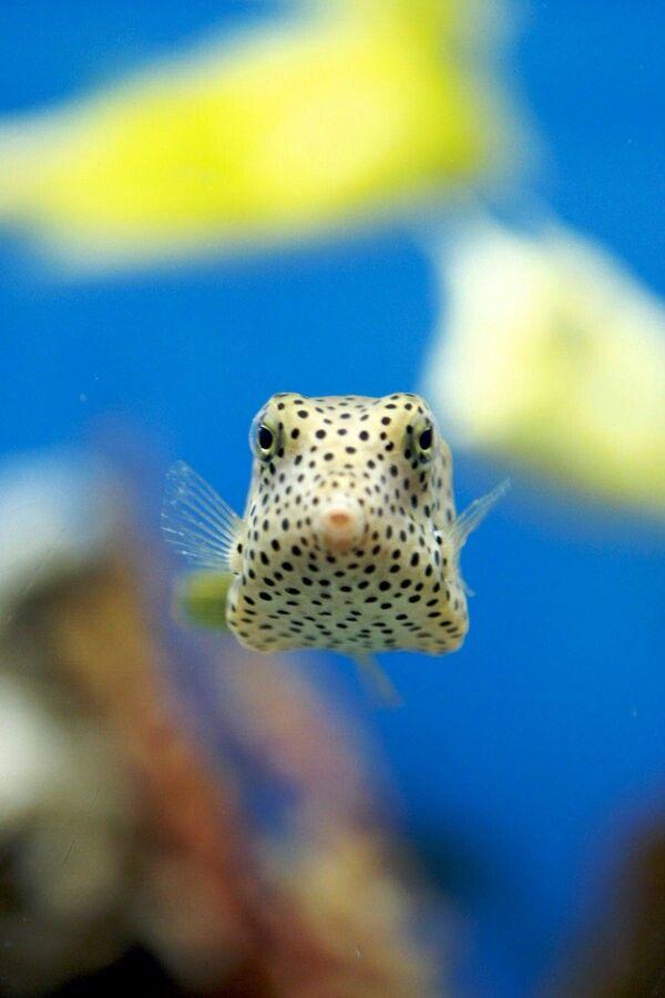 boxfish Water World Pinterest