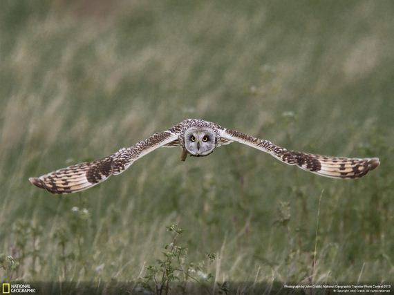 Las 35 mejores fotos de vida salvaje de National Geographic