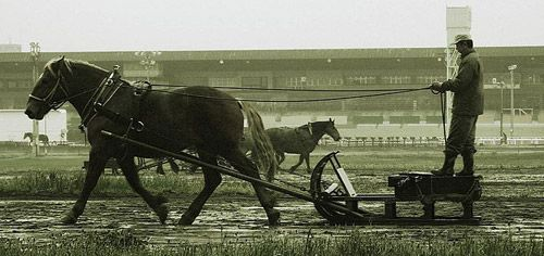 The Ban-ei horse is a blend of Percheron, Belgian and Breton blood, specifically bred in Japan for a unique type of horse racing.