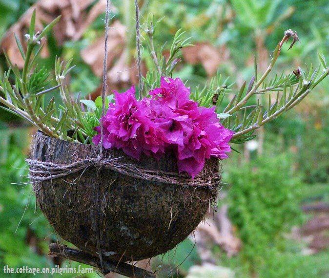 casca de cocos dão lindos vasos