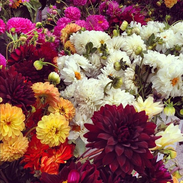 Instagram | Hooray for flowers at the farmers market! | @designconundrum