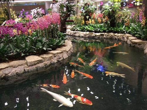 Singapore airport indoor koi pond aquariums fish tanks for Fish tank koi pond