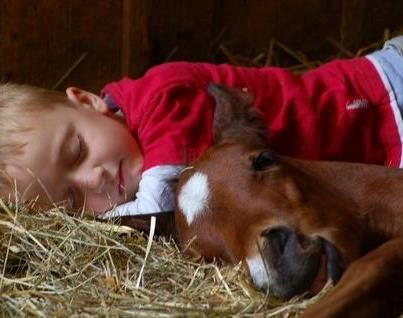 It takes a herd - are there similarities in raising horses and children?