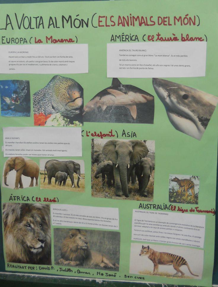Projecte la volta al món: animals