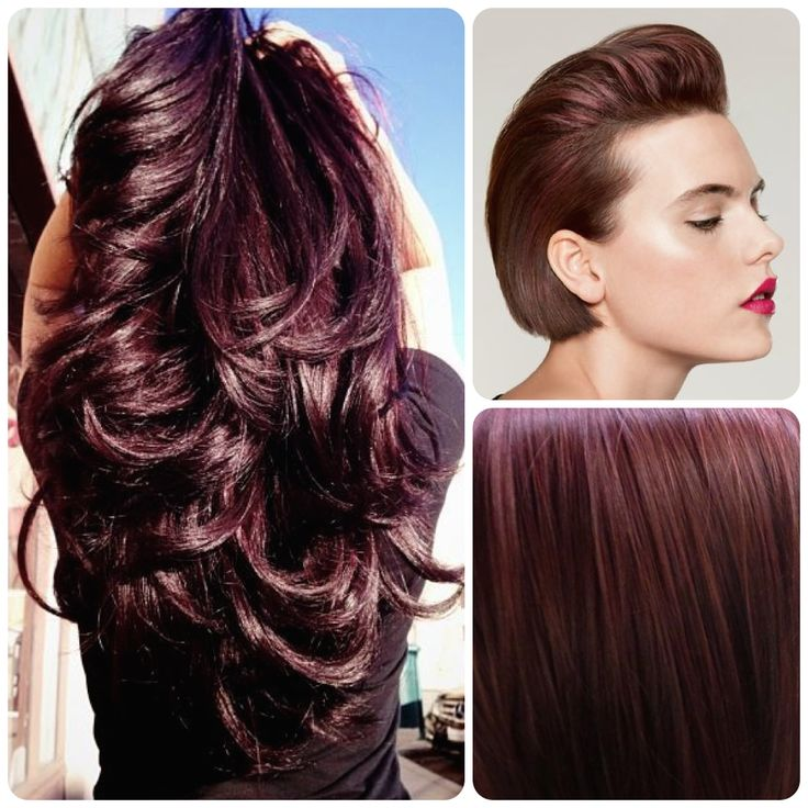 Dark violet brown   Hair Ideas   Pinterest