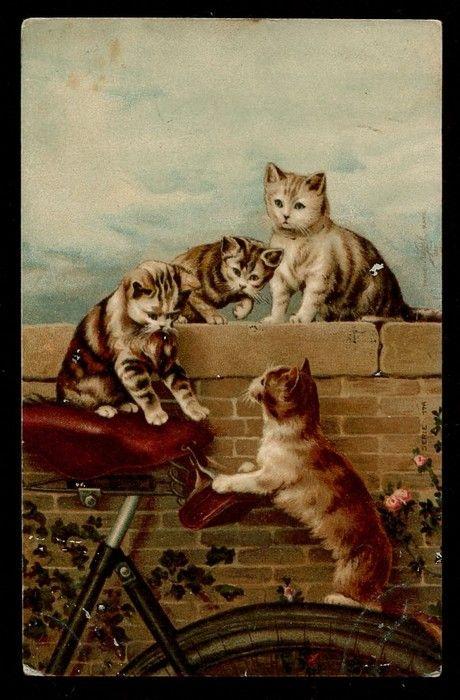 cats in bike