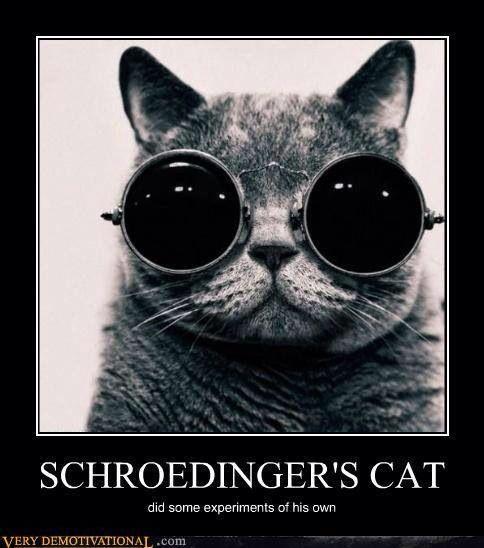 Schroedinger's Cat | DIY posters | Pinterest