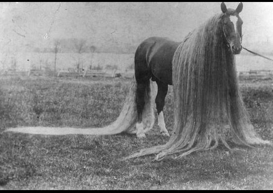 dream horse oregon